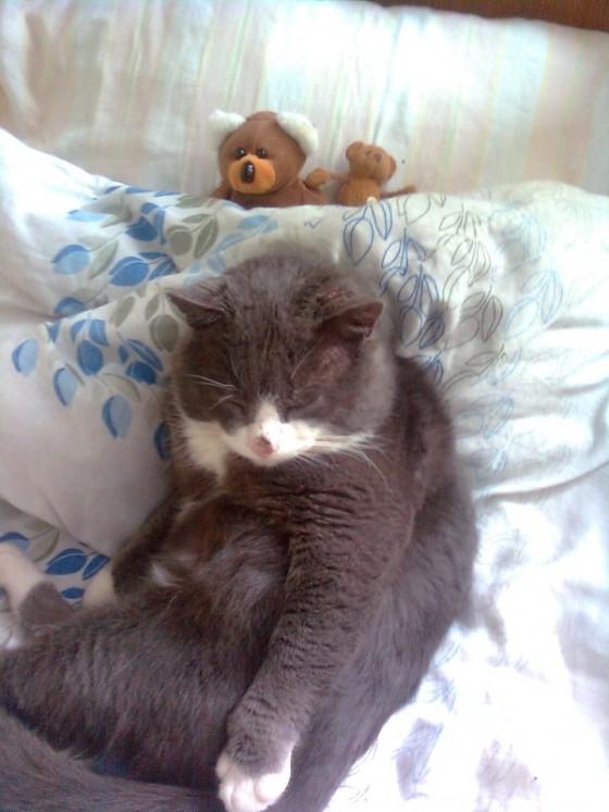 Mano buves katinas ;(