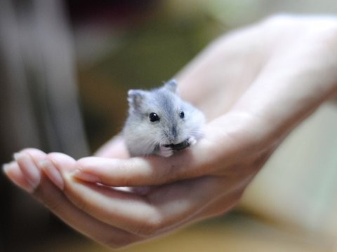 Žiurkėnukas. ♥