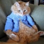 Katinėlis akivaizdžiai nesidžiaugia savo nauju megstiniu