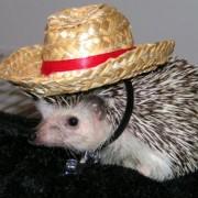 Ežiukas su skrybėle