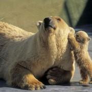 Mamyt, duokš ausį..
