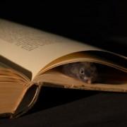 """""""Knygų žiurkė"""""""