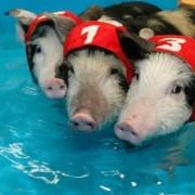 Plaukimo komanda