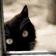 katyte miela ir grazi.