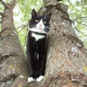 Mano katinas medyje
