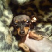 Mano šuniukė :)