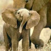 """""""užaugęs būsiu elefantas"""""""