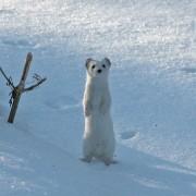 Žiemos valdovas